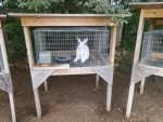 Raising Meat Rabbits: Mistakes and Successes, by JEE