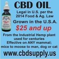 CBD Oil from the Industrial Hemp plant