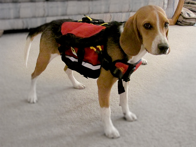 Letter Re: Bug Out Bags for Dogs