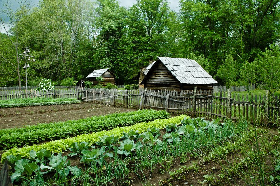 Letters Re: The Human-Powered Veggie Garden, by J.A.