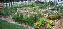 Prepping Garden