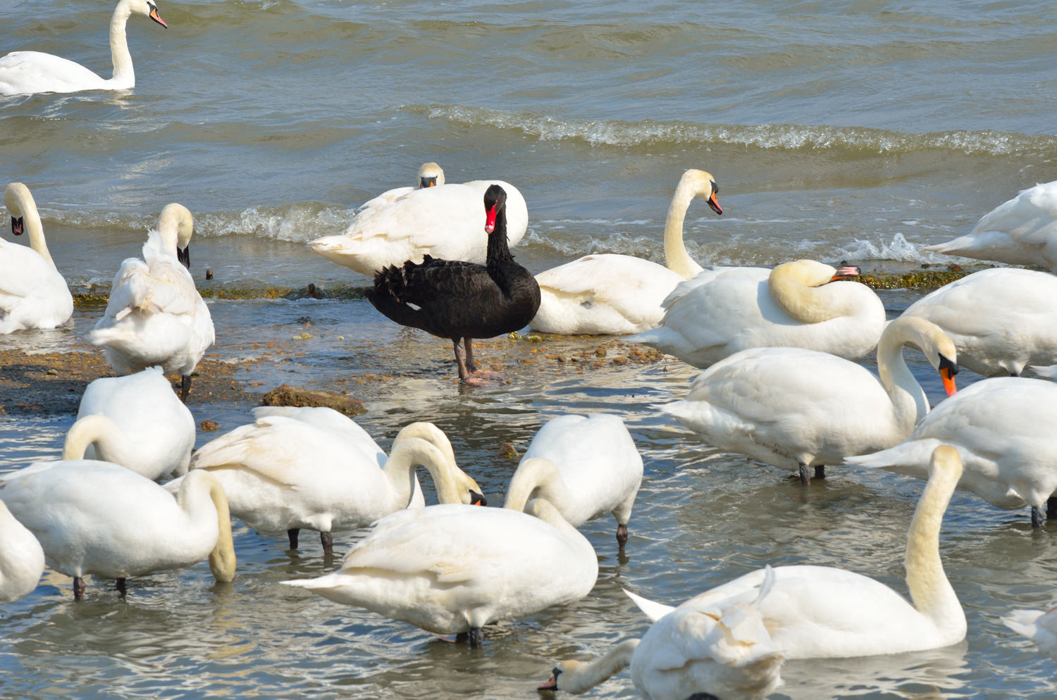 Triggers, Tipping Points, and Black Swans, by Coast Ranger