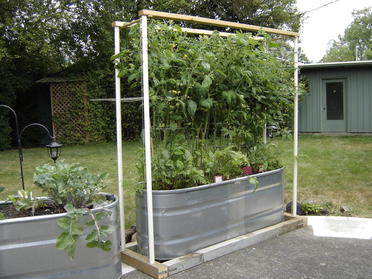 Gardening In Horse Troughs Garden Ftempo