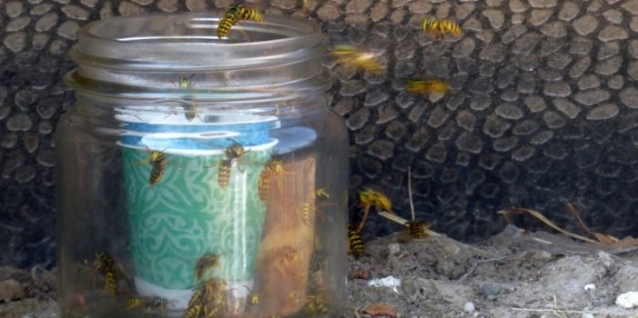 Guest Post: Wasp Control that Works, by Patrice Lewis