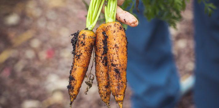 Survival Gardening: The Most Vital Prep – Part 3, by T.J. Dixon