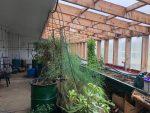 Family Greenhouse Interior