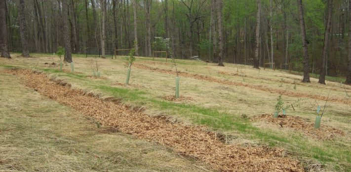Planting Productive Orchards, by David K.