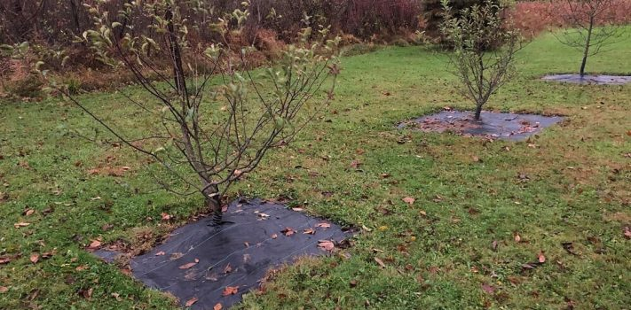 The Innate Value of an Apple Tree – Part 1, by Northwoods Prepper