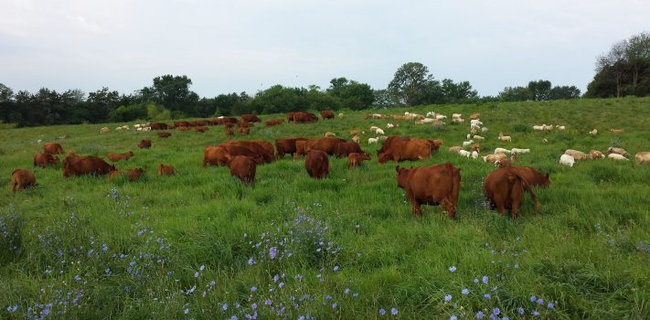 Healthy Livestock for Self-Sufficiency, by Brad N.