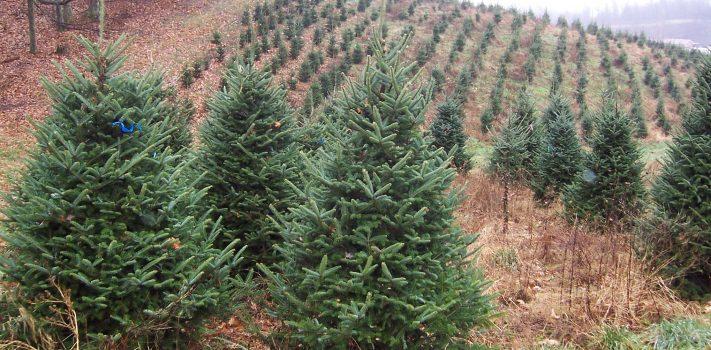 Christmas Tree Farming  for Fun & Profit, by  W.W.